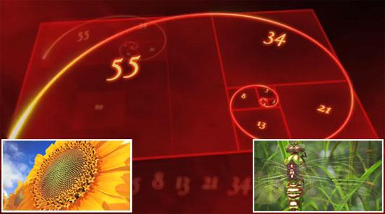 Sucesión de Fibonacci: Naturaleza hecha con números